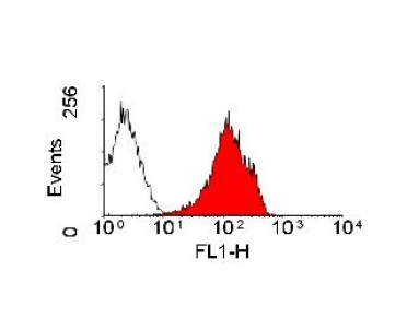 MOUSE ANTI RAT MHC CLASS I RT1A Antibody (OASA04198) in rat spleen using Flow Cytometry